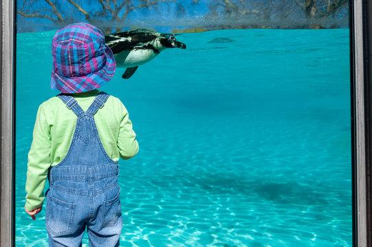 Small child watching Humboldt penguins swimming in big aquarium.