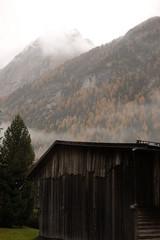 Mountain trees