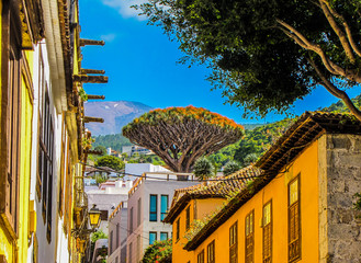 Fotobehang Canarische Eilanden Dragon Tree, Tenerife, Canary Islands, Spain