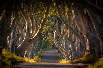 Foto op Plexiglas Noord Europa The Dark Hedges in Northern Ireland