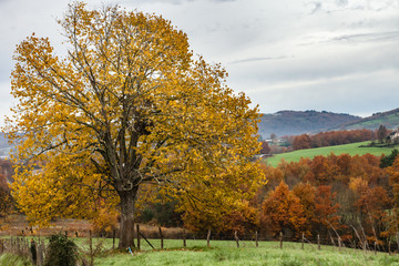 Allassac (Corrèze, France) - Montaural - Vue automnale
