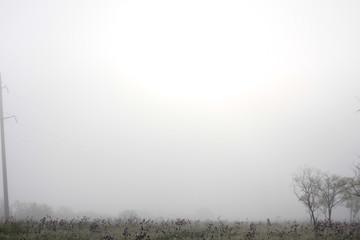 Fog in the forest. Fototapete