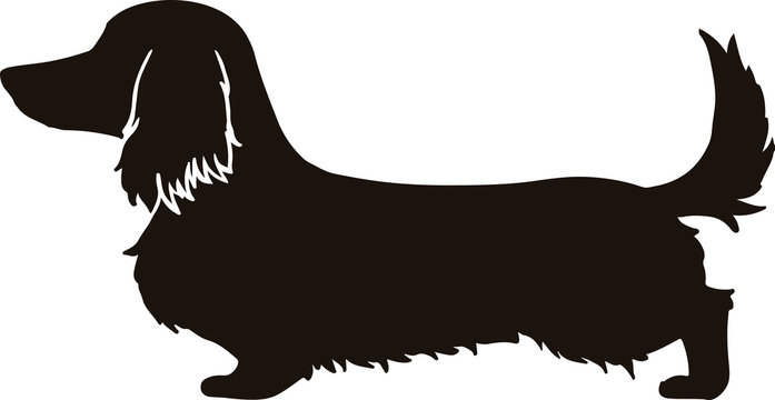 Long haired dachshund Silhouette with ear line