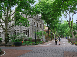 University of Pennsylvania campus is very green and shady, as seen in this view along Locust Walk.