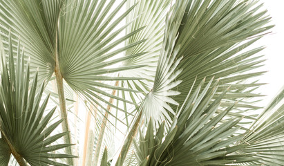 Arty closeup picture of palm leaves, abstract pattern, nature background, retro toned poster