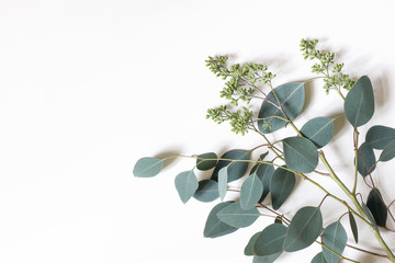 Frame, border made of green berry Eucalyptus populus leaves. Tree branches isolated on white table background. Floral composition. Feminine styled stock flat lay image, top view. Copy space.