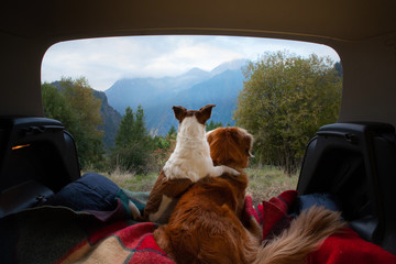 Tuinposter Kamperen dog camping in the car. Nova Scotia Duck Tolling Retriever and Jack Russell Terrier in the luggage compartment. Pets on vacation.