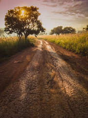 Photo sur Toile Marron chocolat Road in the field against the sunrise background with nature tree.Beautiful landscape for adventure travel.Vintage tone.