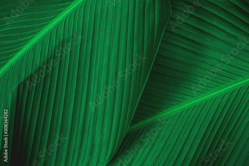 Wall mural abstract green leaf texture, nature background, tropical leaf
