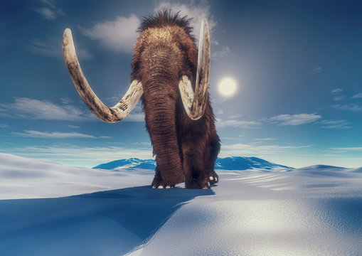 mammoth in the mountains