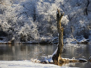 Winter wonderland with ice and snow-covered trees and a tree stump sticking out in the foreground