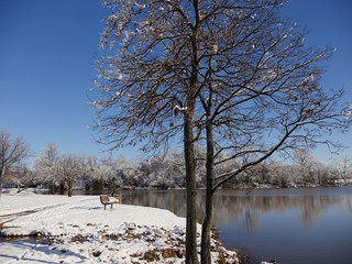 Trees by the pond with the ground covered in fresh snow on a cold winter morning