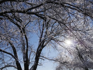 Cropped shot of a tree covered with ice and snow, with the sunlight streaking through