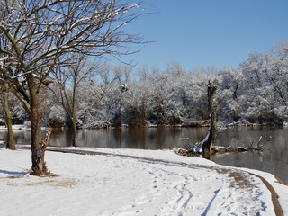 Beautiful winter morning scene by the pond with the ground and trees covered with ice and snow