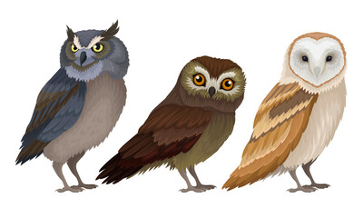 Aluminium Prints Owls cartoon Different Species of Owls Collection, Wild Predatory Birds Vector Illustration