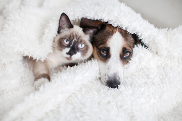 Cat and dog together under white plaid