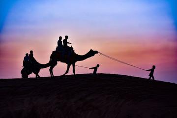 Keuken foto achterwand Roze silhouette of camel in the desert