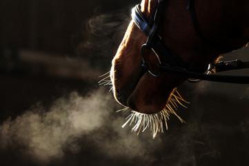 Detail Pferdekopf
