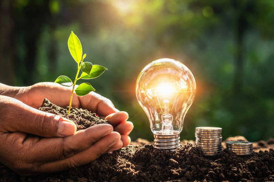energy concept. eco power. lightbulb with money and hand holding small tree  sunlight background
