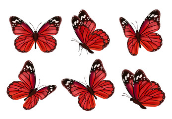 Butterflies. Realistic colored insects beautiful moth vector collection of butterflies. Illustration set of flying butterfly red black