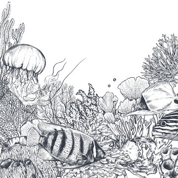 Vector monochrome coral reef background with tropical fishes