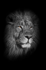 Aluminium Prints bright yellow glowing eyes, discolored muzzle lion male with chic mane portrait close-up.