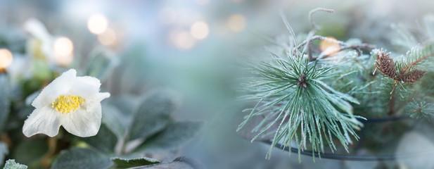 Frosty winter still life