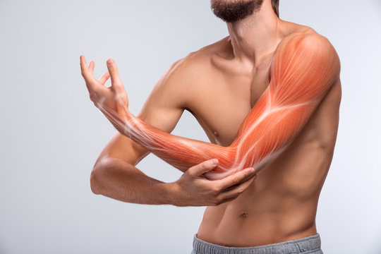 Human arm pain, anatomy of human arm