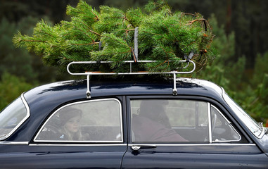 Family puts a Christmas tree that they sawed on top of the car to take home for free at The Dutch Hoge Veluwe National Park in Otterlo