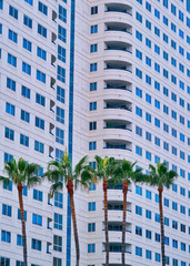 Fototapete - Five Palm Trees by Condo Tower