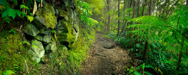 Papiers peints Route dans la forêt Lush rainforest in Volcanoes National Park Big Island Hawaii, USA