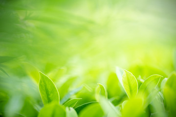 Photo sur Aluminium Spa Closeup nature view of green leaf on blurred greenery background in garden with copy space for text using as summer background natural green plants landscape, ecology, fresh wallpaper concept.
