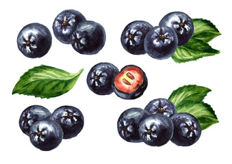 Aronia berries or black chokeberry with green leaf set. Watercolor hand drawn illustration isolated on white background
