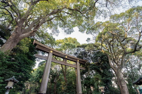 Torii gate at the Yoyogi park