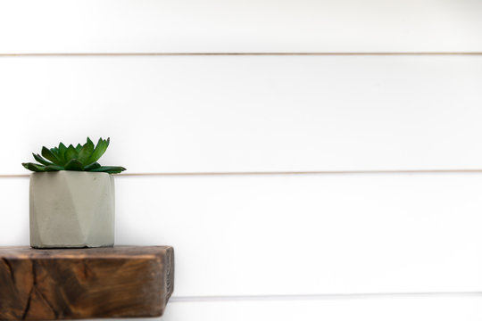 Green plant on a wood shelf with white ship lap background