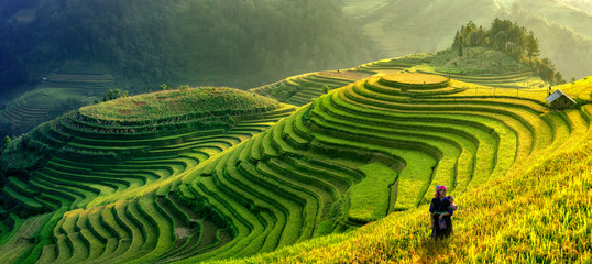 Foto auf Gartenposter Reisfelder Mu Cang Chai, Vietnam landscape terraced rice field near Sapa. Mu Cang Chai rice fields stretching across mountainside in Vietnam.