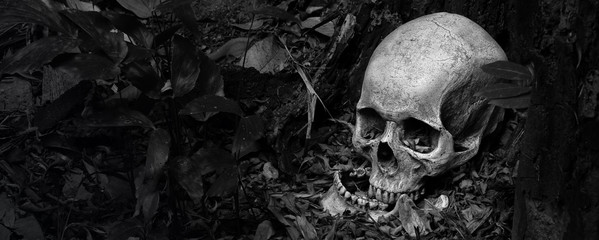Skull and jaw put on ground near old timber in the scary graveyard which has dim light ground background