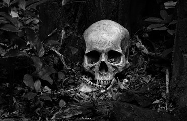 Skull and jaw put on ground near old timber in the scary graveyard which has dim light ground background Wall mural