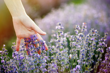 woman's hand touching lavender, 'feeling nature'