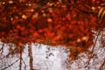 Fond de hotte en verre imprimé Rouge mauve nature abstract in autumn with old leaves in water