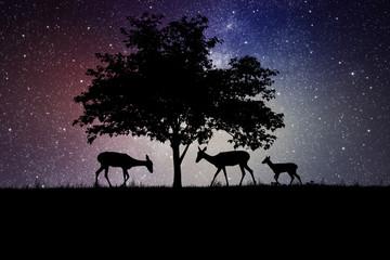 Zelfklevend Fotobehang Schapen silhouettes of deer under a tree at night