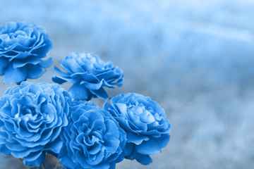 Classic blue 2020 pantone rose flower on nature background. Classic Blue color of the Year 2020.
