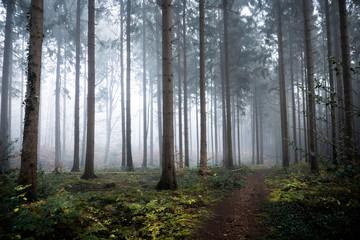 Photo sur Plexiglas Route dans la forêt morning in the forest