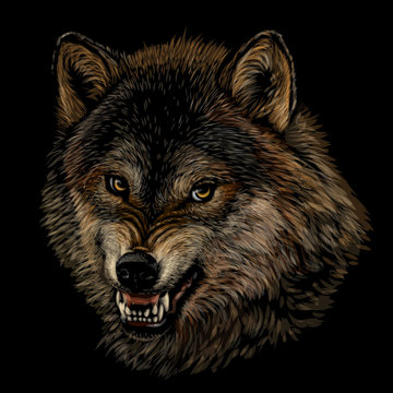 Angry wolf. Graphic color portrait of a wolf's head on a black background.