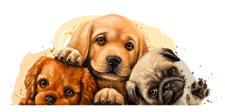 Puppies. Cavalier King Charles Spaniel, Labrador and Pug. Art, color wall sticker with the image of dogs on a white background in a watercolor style.