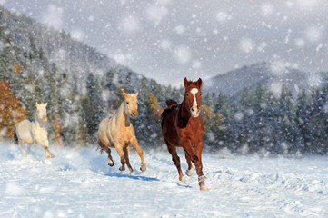 Wall Mural - Horse in a snow on winter background