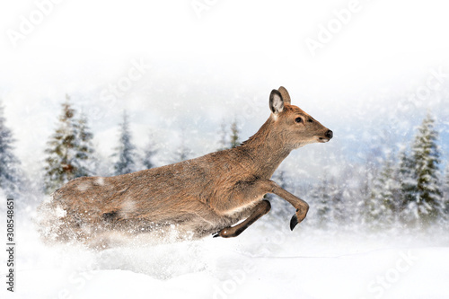 Wall mural Deer in a snow on winter background
