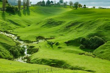 Foto op Canvas Pistache New Zealand - Matamata - land of the hobbits