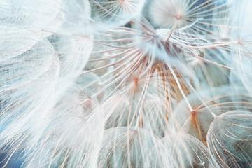 Photo sur Aluminium Pissenlit background fluffy dandelion flower, macro photo.