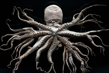Sample photo of a haunted octopus with many legs